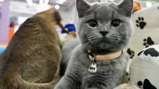 Выставка бездомных кошек в Праге