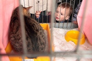 Выставка бездомных кошек-megatour.cz